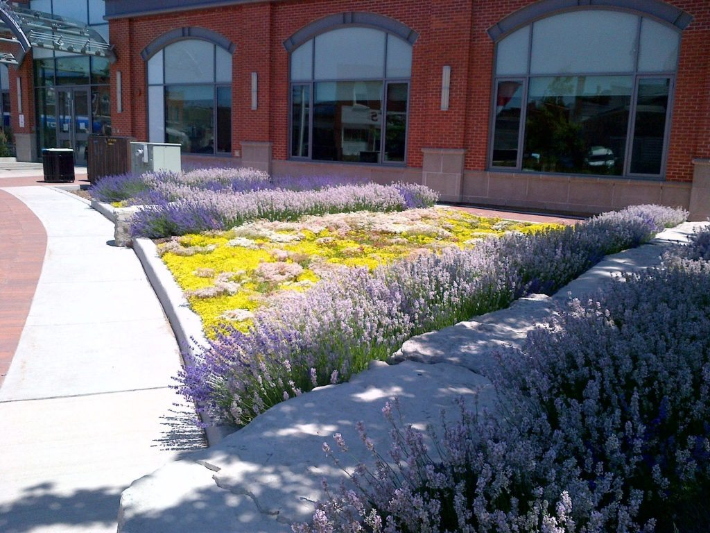 Collingwood Public Library & Green Roof