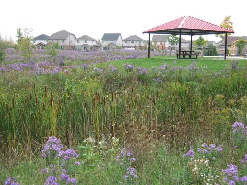 Black ash park envision tatham for Design of ash pond