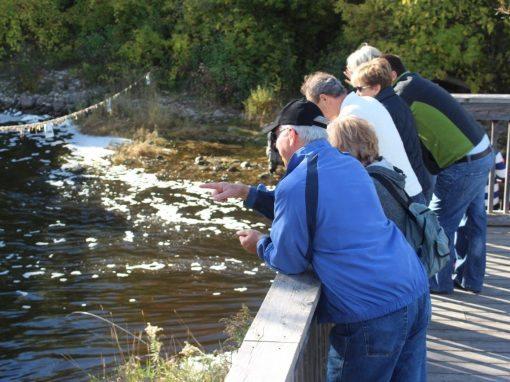 Thornbury Riverwalk Fish Ladder Viewing Platforms